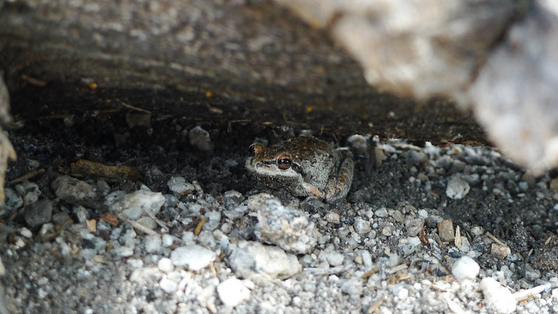 Little froggy who visited us at camp