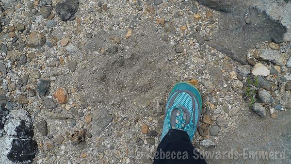 No bears, just footprints.