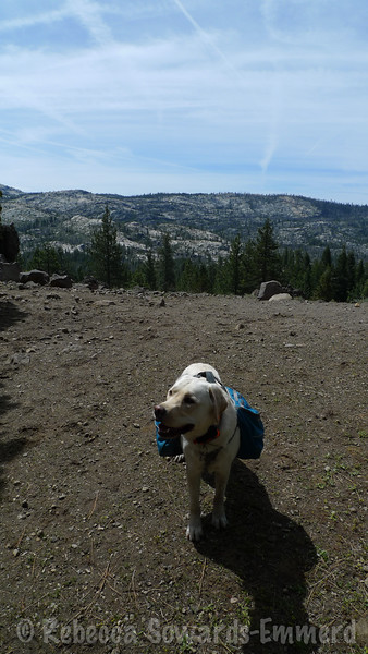 Thor at the first big viewpoint. He's enjoying himself.