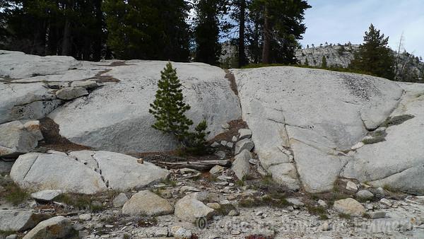 Trees and granite.