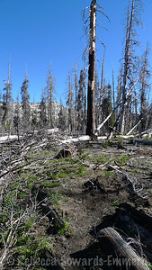 We cut up Piute Valley among a lot of deadfall and took the upper loop back via Camp Lake.