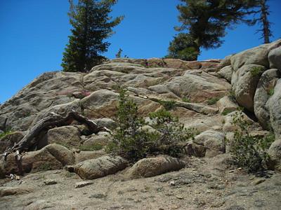 Flowers growing in the rock