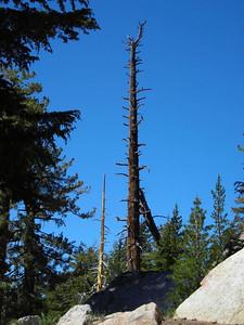 Dead tree along the trail.