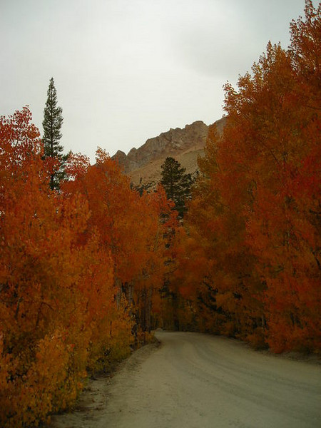 Red and orange aspens along the road to North Lake