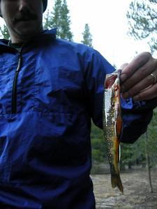 Biggest fish of the day, a colorful brookie