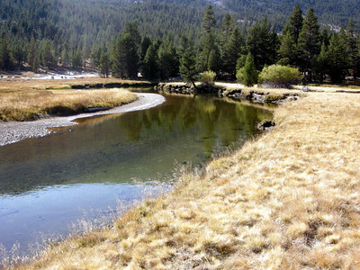 Tuolumne River, which has teeny tiny trout.