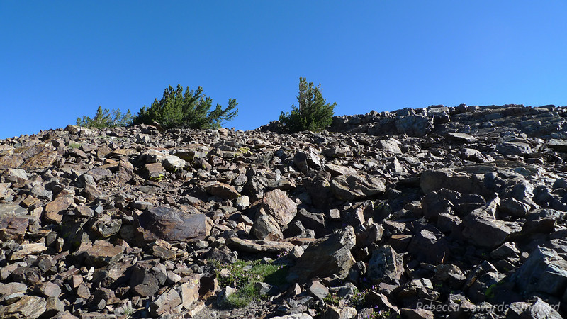 This Small jumbly pile of rocks just below the summit ridge is the most complicated part of the hike - and it's easy.