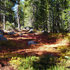 Fall colors<br /> <br /> There were a few fall colors, but not many in this primarily pine forest.