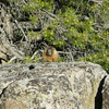 In the morning we had marmot visitors<br /> <br /> It was a family with 4-5 fuzzy cute juveniles, like this guy