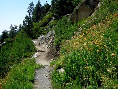 Wildflowers everywhere! Lots of sneezeweed through here.