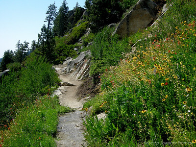 Wildflowers everywhere! Lots of sneezeweed through here.