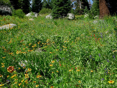 Fields of wildflowers along the trail