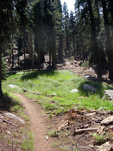 The Wolverton trailhead isn't technically the start of the High Sierra Trail, but the initial few miles is much nicer and it connects to the HST in a few miles. It's shaded and climbs to Panther Gap which offers a great view of the Great Western Divide.