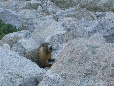 Just like yesterday, a marmot greeted us within the first mile of the day.