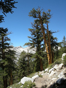 I love the knarly trees at this altitude.