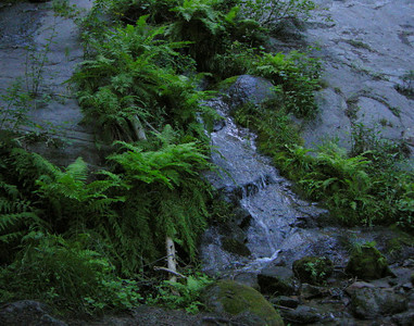 Within a few minutes of leaving camp I run into this ferny waterfall