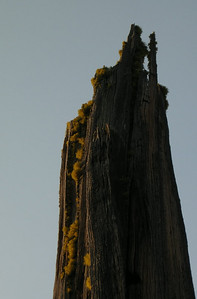 Moss on tree by camp