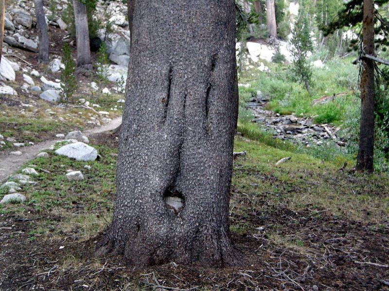 Shocked tree is shocked