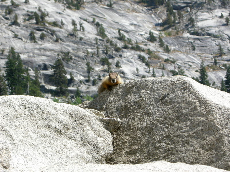 A baby marmot watches me walk along the lakebed<br /> <br /> It was another half mile until I reached a point where the ferry could pick us up