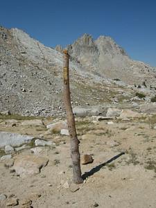 A treetrunk? Or a sundial?