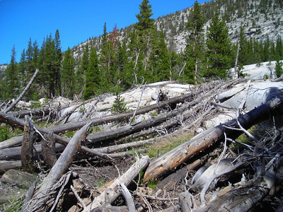 Interesting deadfall/cut trees