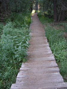 Boarded trail to keep people off the fragile meadow