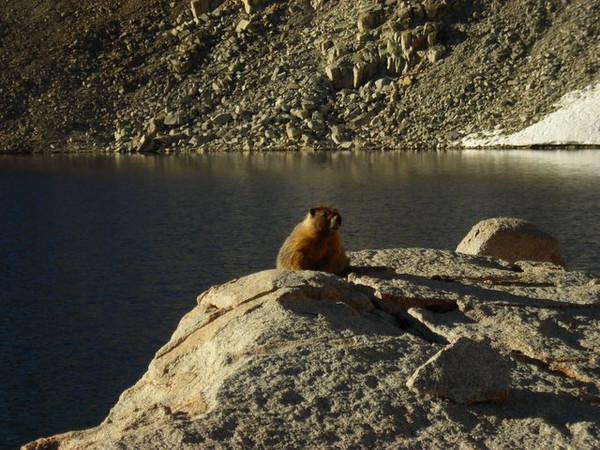 The Lake Marjorie Marmot - I hear he's famous<br /> <br /> This furry dude was our campsite guard - he perched on his rock here and kept a close eye on us.