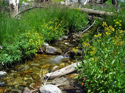 Bubbling Creek  The occasional pretty stream and wildflowers would perk us up on this relatively dull stretch.
