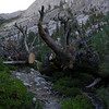An enormous dead tree fell across the trail...<br /> <br /> ...but trail crews had chainsawed right though it