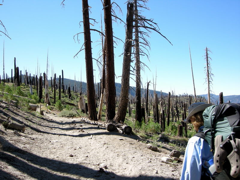 Remnants of the 1992 Rainbow Fire<br /> <br /> The JMT passes through this burnt out forest for a mile or so