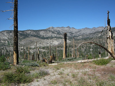 View through the burnt forest to the south end of the Ritter Range