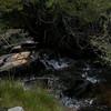Whitney Creek