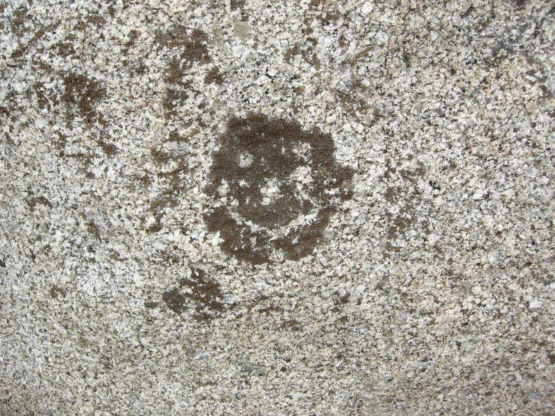 Happy lichen is happy