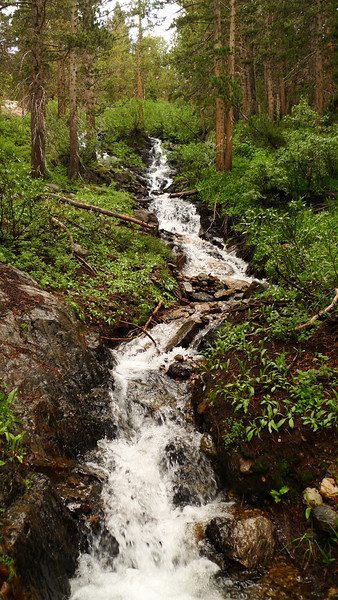 Rushing creek. I crossed this at about the same time last year when I climbed Tioga Peak and it was nearly dry.