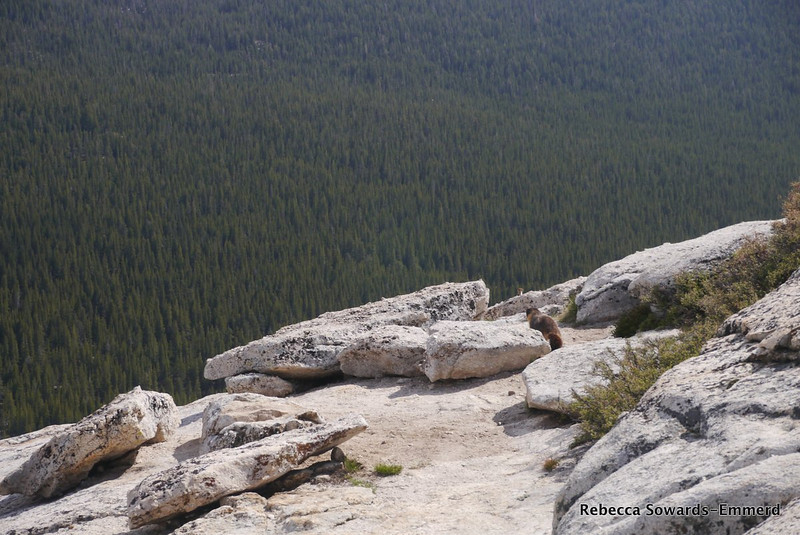 My first marmot of the season! No hikers out today - so I shared the summit with this furball.