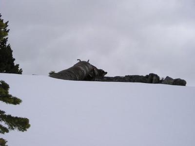 Fallen tree near camp