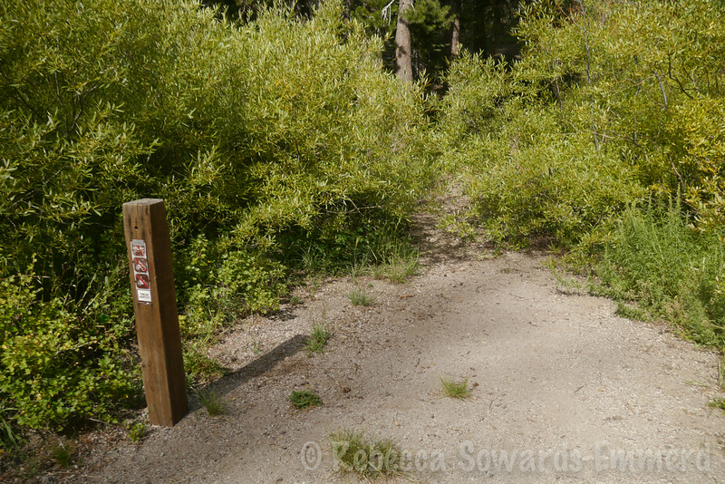 I started at this trailhead - turns out there is a slightly more obvious one down next to campsite #40.