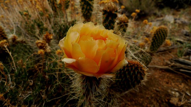Cactus blossom on the return hike.
