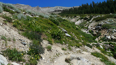 Flowery terrain and a creek below Timber Gap and Empire Mountain