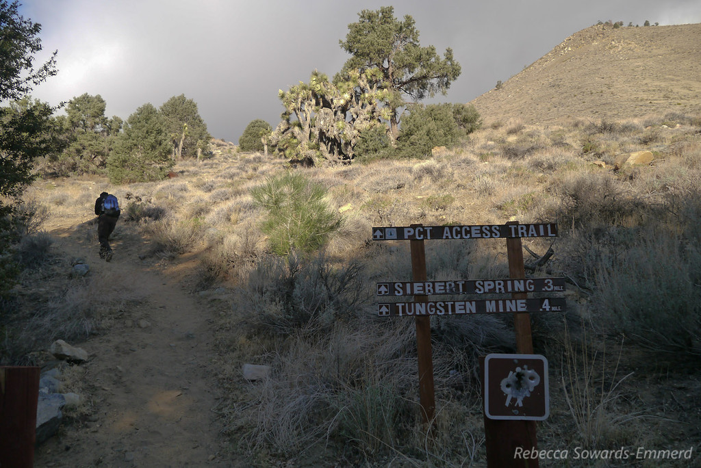 We decide to follow the 'PCT access trail' to a saddle, then cross-country up the peak.