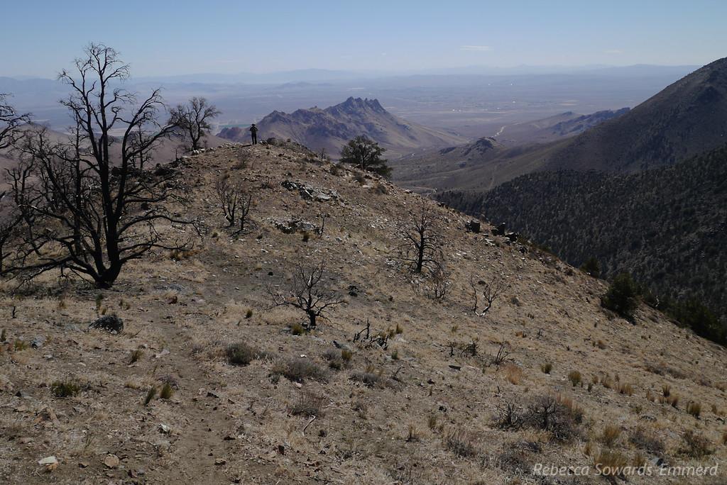 Trailing down the ridge.