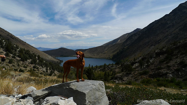 This pooch was with the group hiking behind us. She was very good at posing for photos.