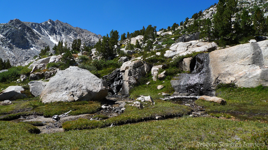 Beautiful alpine meadow along this stretch.