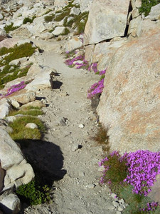 Trail to New Army Pass  Beautiful rockfringe along the trail.