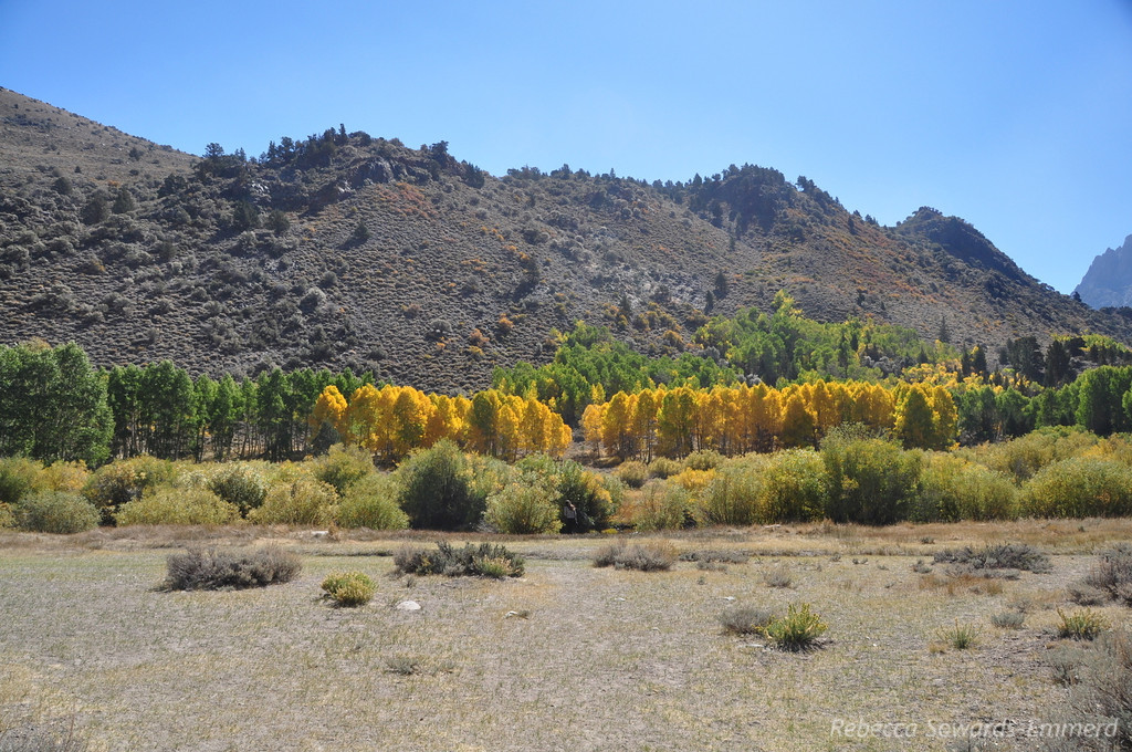 The next morning we drove the June Lake loop to check out fall colors. Nothing spectacular this year.