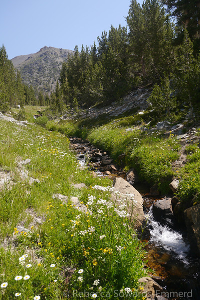 The creek we are walking along is gorgeous!