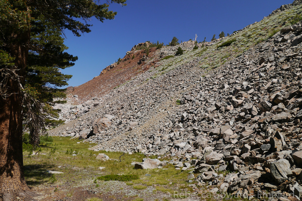 After some climbing we come to this abrupt ending to the forest at this pile of talus.