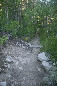 Starting up the trail. Tiny little patch of yellow - I can't believe it's almost fall!