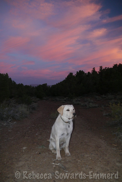 Sunset was beautiful.  Thor wanted to participate.