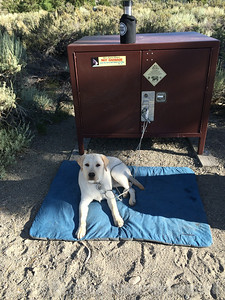 In our campsite at Oh Ridge campground. Thor guards the food from bears.
